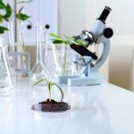 Kozzi-green-plants-in-biology-laborotary-2387 X 1591